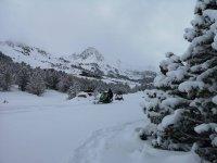 在雪地树木中
