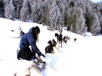 Sledding with dogs