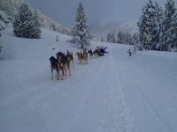 有趣的冲雪漫步