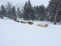 Musher dogs on the road