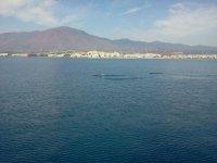 Cetaceos frente a la costa