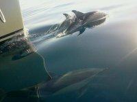 Delfines en grupo en la proa