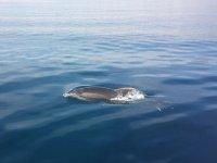 Sorprendidos por un delfin