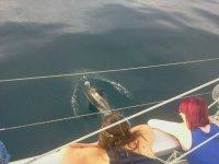 Viendo los animales desde el barco
