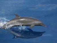 Delfin saltando en el mar