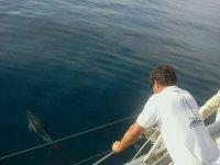 El delfín pasa junto al barco