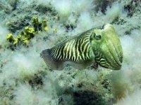 与水下物种相遇