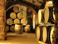 Discover the winemaking
