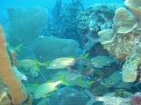 Diversas especies marinas