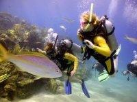 Bucearás en aguas transparentes