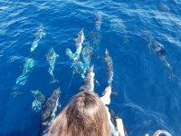 Delfines nadando a nuestro lado en el barco