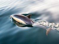Paseo en Barco avistando cetáceos