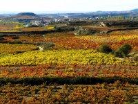 Vineyards in Brinas