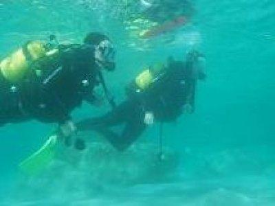 M.A.D. Divers