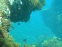 Grietas marinas