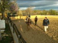 Trabajo con el caballo en pista externa