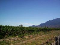 Walk between vineyards