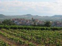 Walk among vineyards