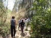 Caminos por los bosques de Lloret