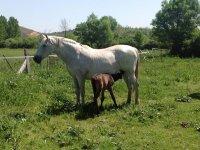 Uno de nuestros caballos con su cría