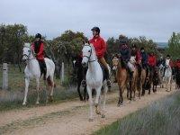 Con los caballos de romeria