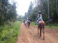 Horse riding walking