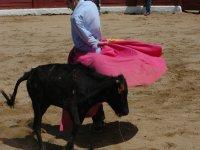 Nuestras vaquillas son de corta edad y con los cuernos recortados