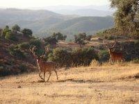 Coto de caza en las proximidades de Sevilla