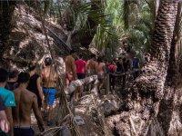 Excursion entre palmeras