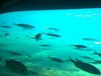 Viendo la fauna marina