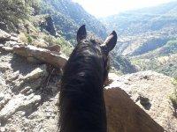 Rutas en caballos pura raza