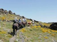 Organiza tus jornadas a caballo