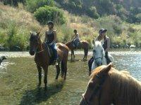 El sol y el agua sobre los equinos