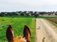 Perros delante del caballo