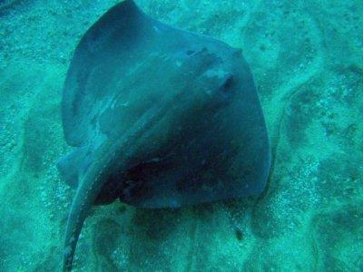 Ocean Deep Dive Buceo