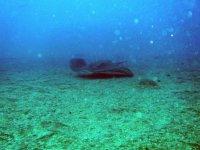 享受周围的潜水野生海豚