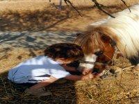 Caballos y Ponys para niños