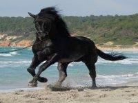 Horses in Menorca