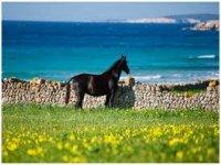 Horse riding on horseback near the sea