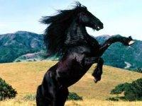 Horseback riding with monitor