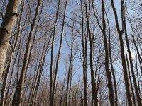 bosques senderismo