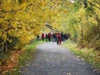 rutas hojas amarillas