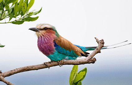 Ornitología en Tarragona