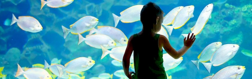 Ofertas de Aquarium  Lanzarote