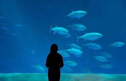 Aquariums en España
