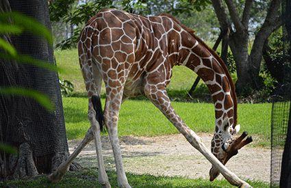 Safaris en España