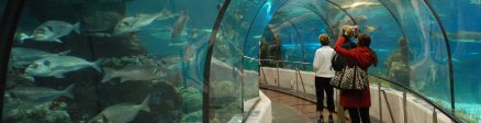 Grupo de Aquariums