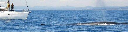 Grupo de Avistamiento de Cetáceos