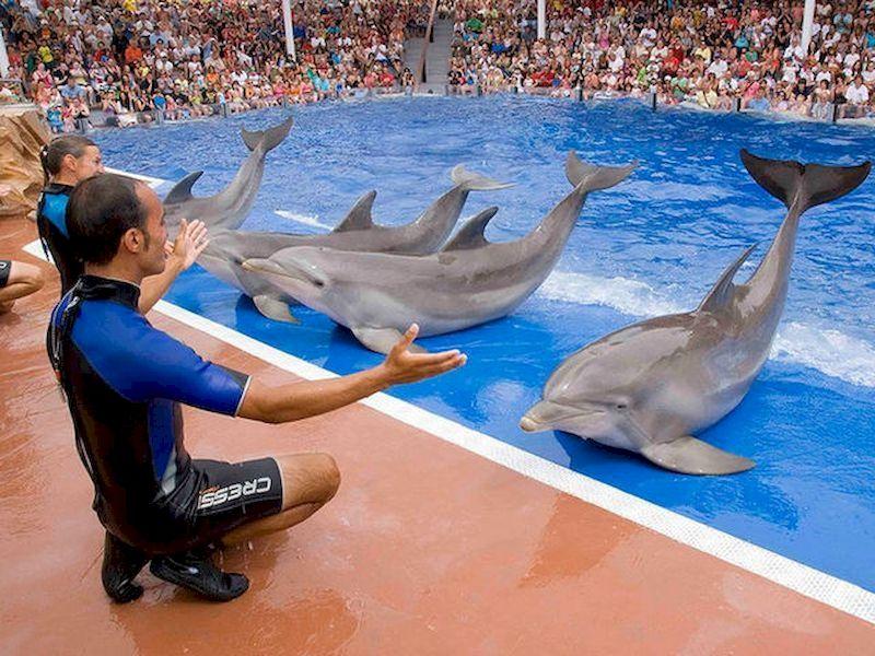 Podrás disfrutar de exhibiciones e incluso tocar a los animales