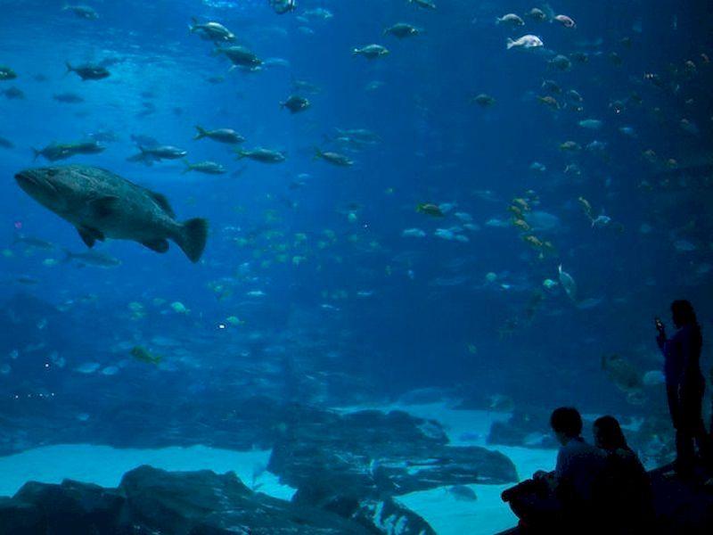 Relax bajo el océano